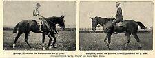 Herrenreiter * Rennpferde der Saison 1900 * Bilddokument II.