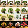 Money Wealth Tree Feng Shui Lucky Rich Tree Natural Pretty Crystal Gem Tree