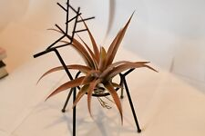 plant promotion gift,metal deer with tillandsia capitatal pink,usa free ship