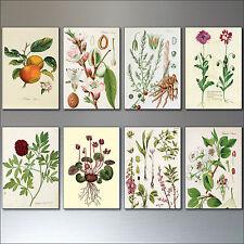 Vintage 8 botánico Ilustraciones Imanes del refrigerador, jardinería, estilo victoriano de bocetos