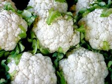 100 Seeds CAULIFLOWER Snowball Y Improved Heirloom Garden vegetable White