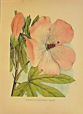 Hollyhock, Hibiscus Splendens, Flower Gardens, Vintage 1868 Antique Art Print