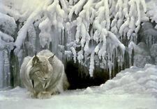 "Dozing Lynx   - By Robert Bateman LTD Giclee Canvas  size 30"" x 40"""