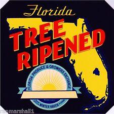 Winter Haven Florida Tree Ripened Orange Citrus Fruit Crate Label Art Print