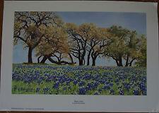 Texas Bluebonnets Live Oak Trees Wildflowers Art Reproduction Print Open Edition