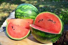 "Bulgarische Wassermelone ""Michurinka"" Saatgut 5 Samen"