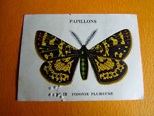 CHROMO 1939 CASINO PAPILLON BUTTERFLY N°19 FIDONIE PLUMEUSE