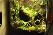 Terrarium Vivarium Live plant Lot  great for Frogs Toads Crested Geckos