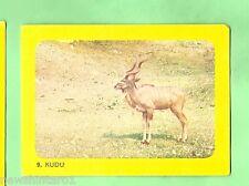 SANITARIUM 1965 AUSTRALIAN AFRICAN SAFARI  CARD #9  KURDU