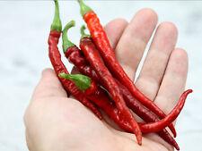 30++ CAYENNE LONG SLIM HOT PEPPER SEED, NON-GMO