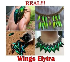 100 pcs Wings Elytra Natural Jewelry Craft Real Green Golden Design Insect D256