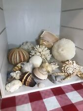 Sea Shell Collection-large and small