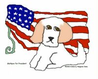 Maltipoo for President Pop Art Print 8x10 Mixed Breed Dog Kimberly Helgeson Sams