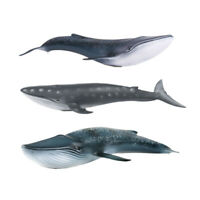 Blue Whale Sulphur-bottom Whale Figure Ocean Animal Model Collector Toy Kid Gift