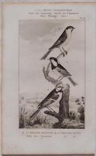BUFFON ORIGINALE UCCELLI BIRDS CINCIALLEGRA CINCIA BIGIA CINCIARELLA ORNITOLOGIA
