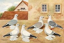 Ice Pigeons Glossy Textured Print C. Witzmann