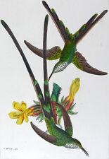 1857,REICHENBACH HUMMINGBIRDS FINE HAND COLOR ENGR. FOLIO U1N