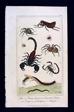 1822 Davenport Print - Scorpion Spider Tarantula Centipede Millipede - Insects