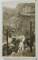 Arizona Rppc Apache Trail Lovely Cactus Plants Photo Postcard P3