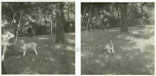 1940s Photos Chubby Little Girl Back Yard Collie Dog Puppy Swings Mathews Mo