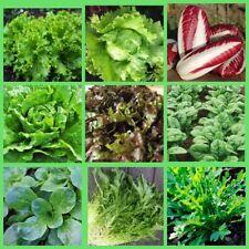 100Pcs Lettuce Vegetable Seeds 3 Kinds Organic Green Juicy Plants Annual Garden