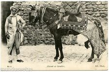 Horse & Cavalier Arab. Ceremony Gaani .magnifique Parure. Arabian Horse