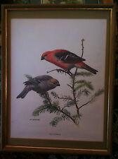 J F Lansdowne Vintage Bird Lithograph `Pine Grosbeak`  ~ Framed ~