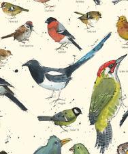 A3 BRITISH GARDEN BIRD CHART POSTER NATURE ANIMAL WILDLIFE PRINT