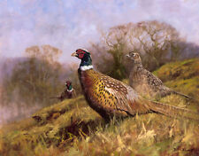 More details for pheasants. ltd edition print by john trickett. game birds trig-139