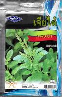 2970 seeds Thai Holy Forest Basil Kaprao,Ocimum Sanctum Tulasi Herb Food Spicy