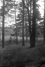 1910s ESHER #2 Woodland Antique Photographic Glass Negative (Trees Surrey)