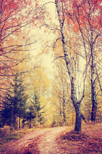 BEAUTIFUL AUTUMN FOREST CANVAS PICTURE #12 STUNNING NATURE LANDSCAPE A1 CANVAS