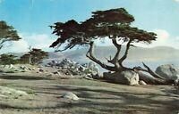 Postcard Monterey Cypress Pebble Beach California