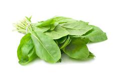 Large Leaf Sorrel Rumex acetosa 200 seeds * Non GMO * ez grow * E64