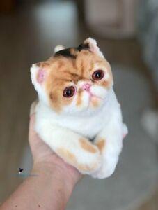 💕  kitten/cat  9,5 in(24cm) realistic toy💕