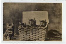 (Sc275-100)  One Too Many, Cats in Basket, unused ,Vg