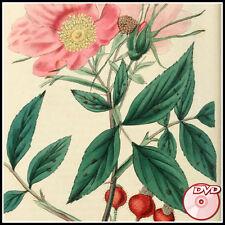 Les Roses - Redoute - Flowers Botany + Bonus - How to grow roses books - 2 DVD's