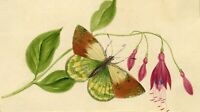 Fuschia Flowers with Butterfly – Original 19th-century watercolour painting