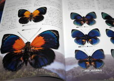 What is the most beautiful Butterfly in the world : Illustration book #0975