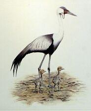 Bird MALAWI WADER WWF Bird PANEL PAD Premier Day 1° FDC 494