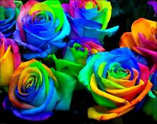 Make Your Own Rainbow Rose! 10 Seeds! Comb. S/H! See listing for details!