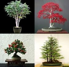 Mix of 20 tree seeds. Tree seeds that can be used for bonsai. 5 of each variety
