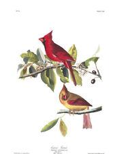1830 John Audubon - Cardinal Grosbeak Fringilla Cardinalis Havell Edition
