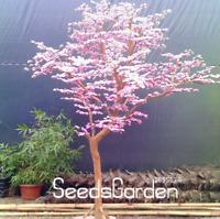 Red Japanese Cherry Plants Courtyard Garden Bonsai Tree Sakura NEW 10 Pcs Seeds