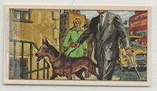 Seeing Eye Dog Used By Blind People Vision Impaired Vintage Trade Ad Card