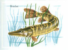 IMAGE CARD 60s Brochet  Esox lucius Northern pike  Esocidae