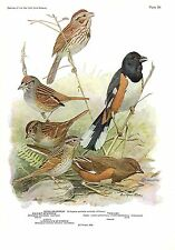 "1936 Vintage FUERTES BIRDS #84 ""TOWHEE, SONG SPARROW &"" Color Plate Lithograph"