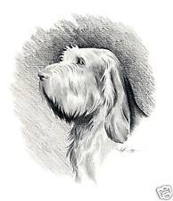 Spinone Italiano Drawing Art 11 X 14 Print by Artist Djr