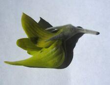 Regal Birdflower  ( Crotalaria cunninghamii ) 10 Seeds