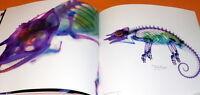 New World Transparent Specimen book from japan #0325